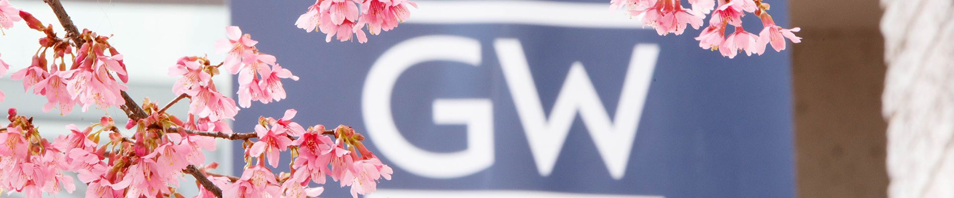 Cherry Blossoms outlining a GW flag